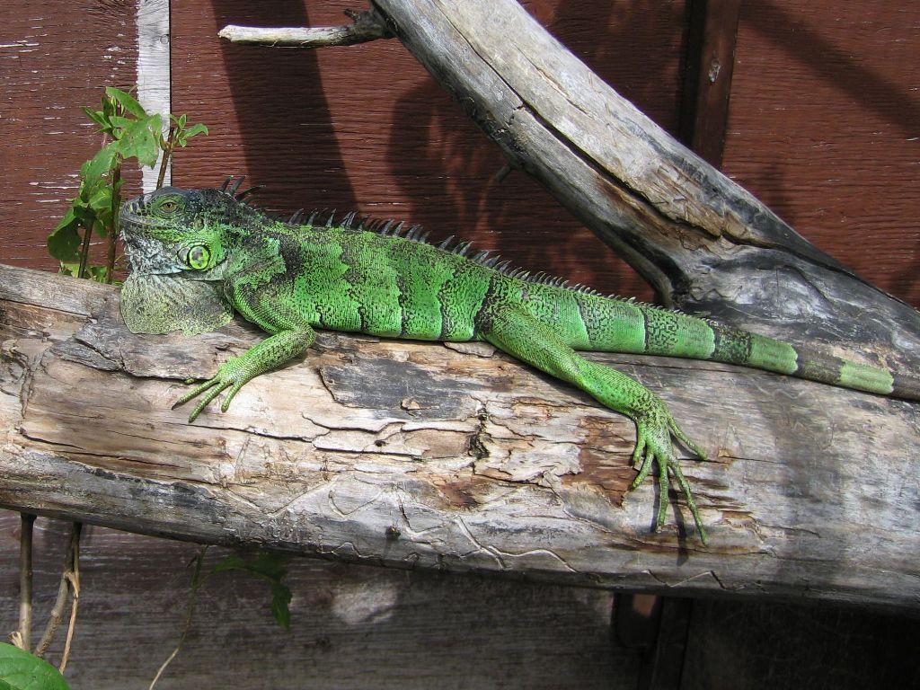 Little Ray U0026 39 S Reptile Zoo